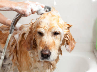 The Clean K9