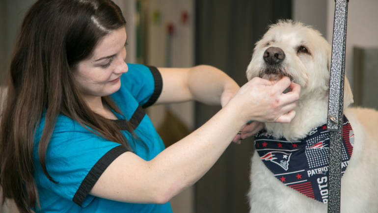 Murphy, a Labradoodle, gets a trim from Pooch Pawlor owner Erin Ago.